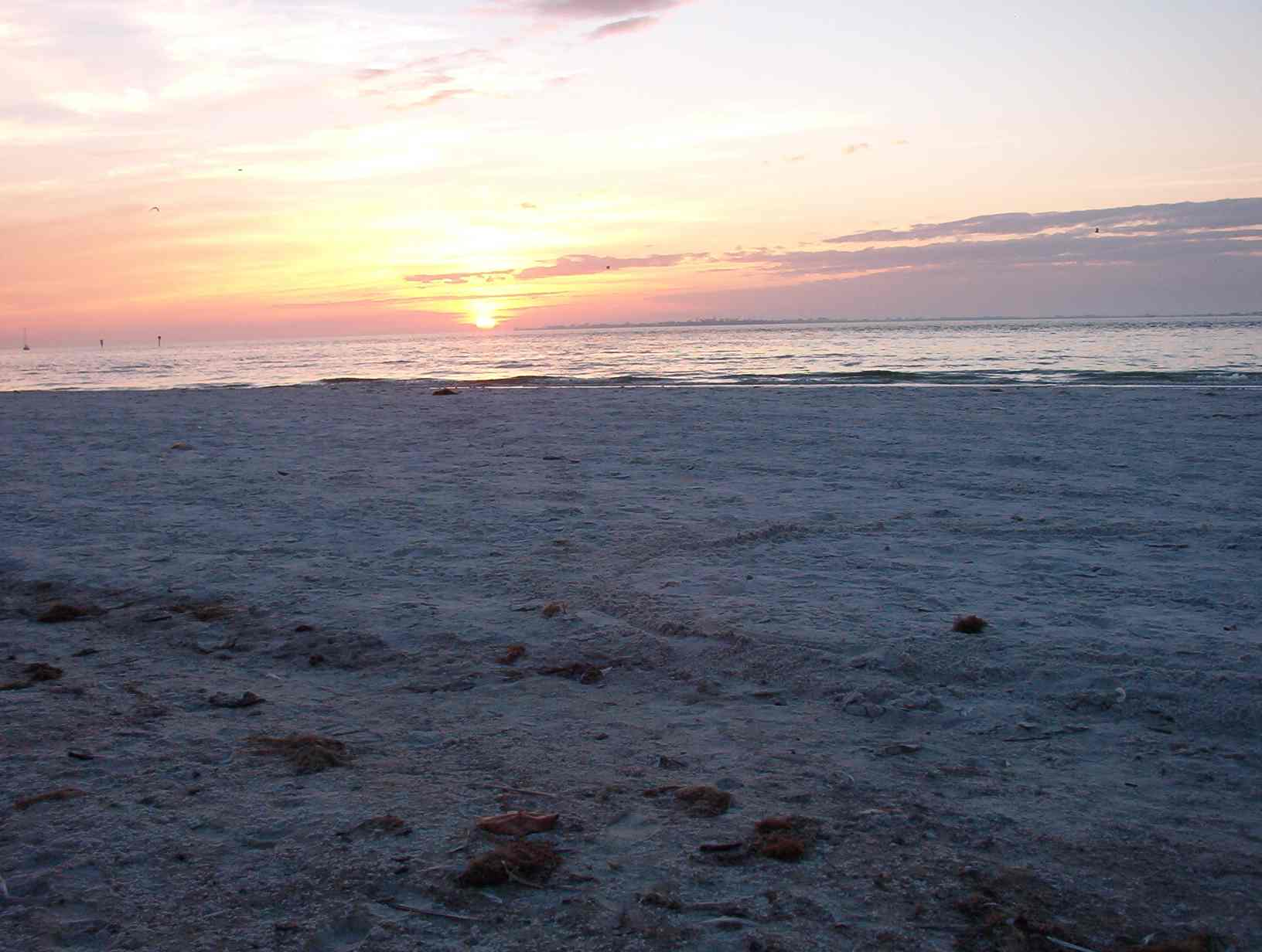 Moon Tide was composed in Fort Meyers, FL, on 'turtle island' the place where sea turtles lay their eggs.